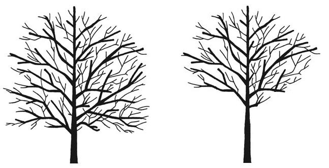 Tree Surgeons Bromley