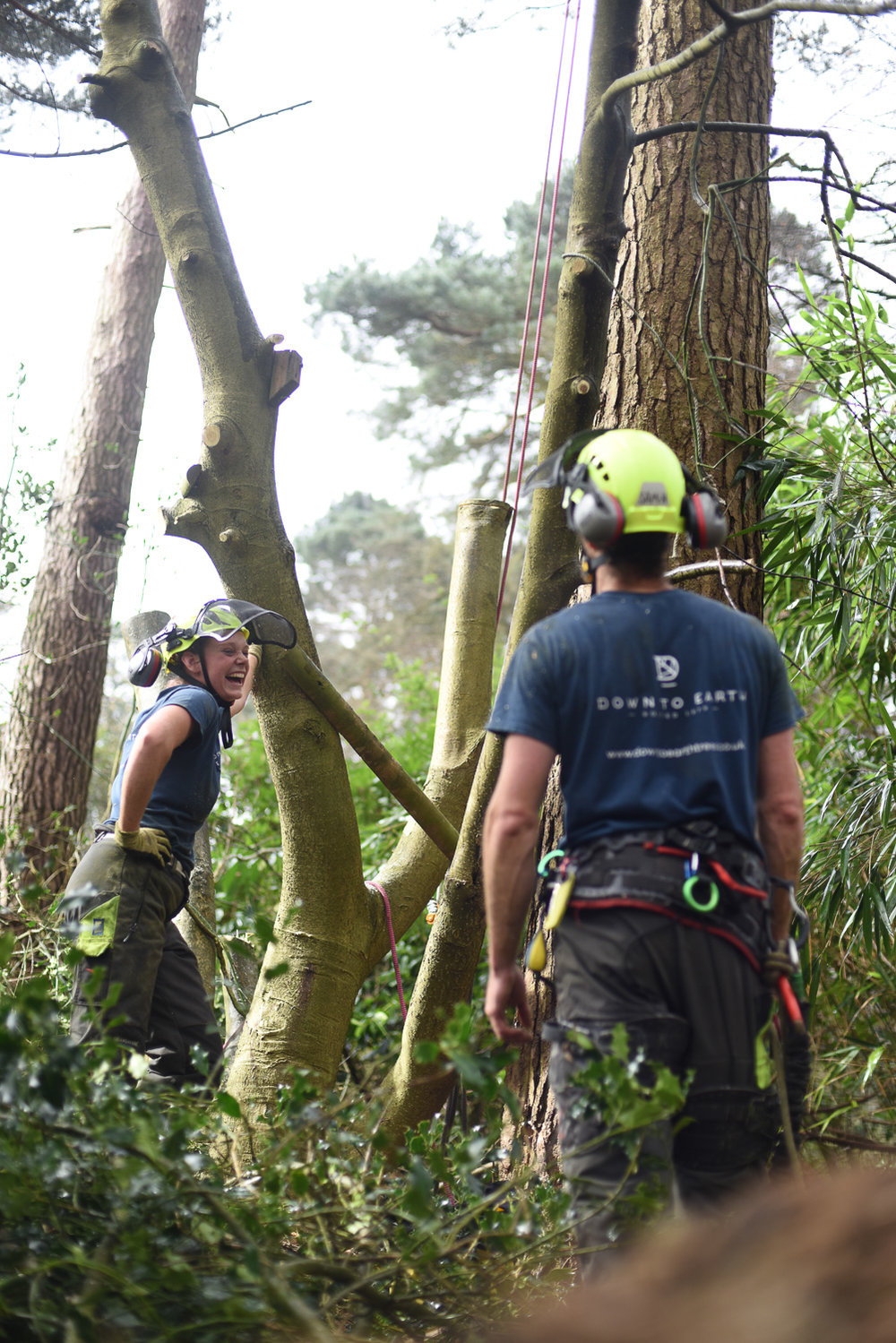Professional Tree Care Kent
