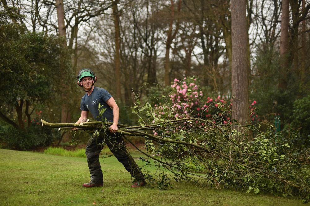 Maidstone Tree Surgery