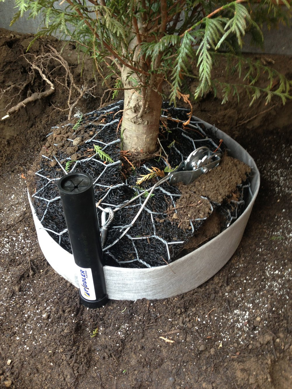 Tree planting Sevenoaks