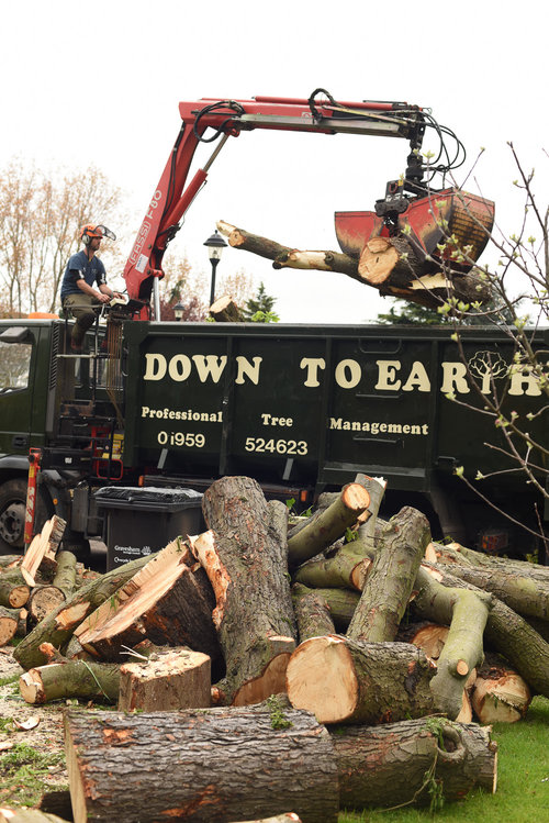 Crowborough-tree-management-services.png
