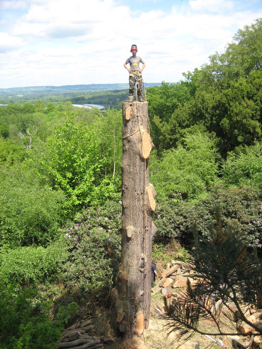 Tree surgeons sevenoaks.jpg