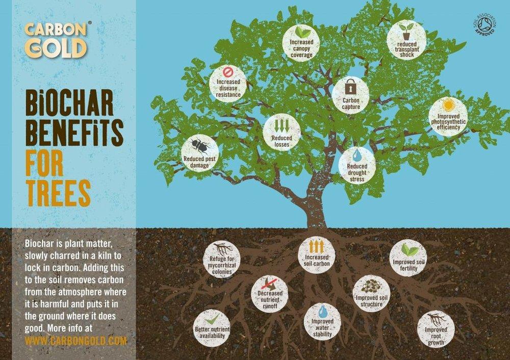 CG-tree-infographic-2-1024x724.jpg