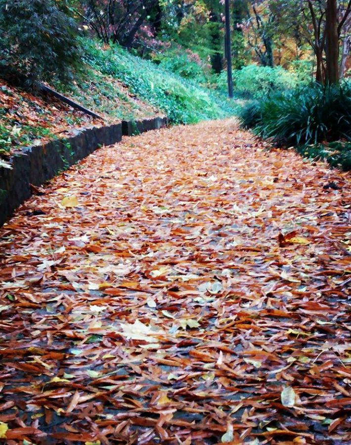 fall path 2.png