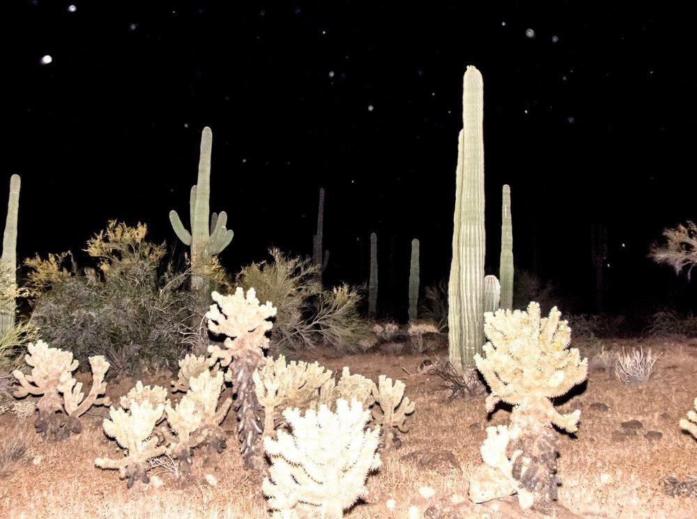 Sonoran Desert, 2014.