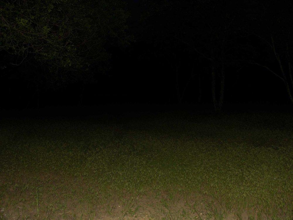Backyard, 2005.
