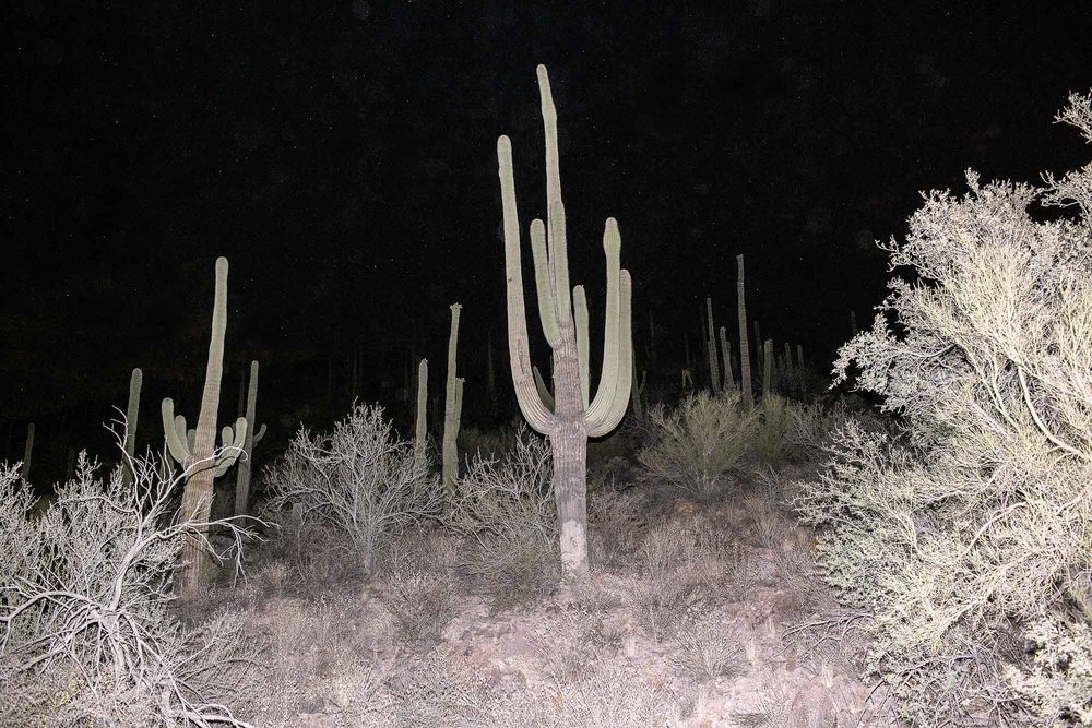 Lost Light, Sonoran Desert, 2010.