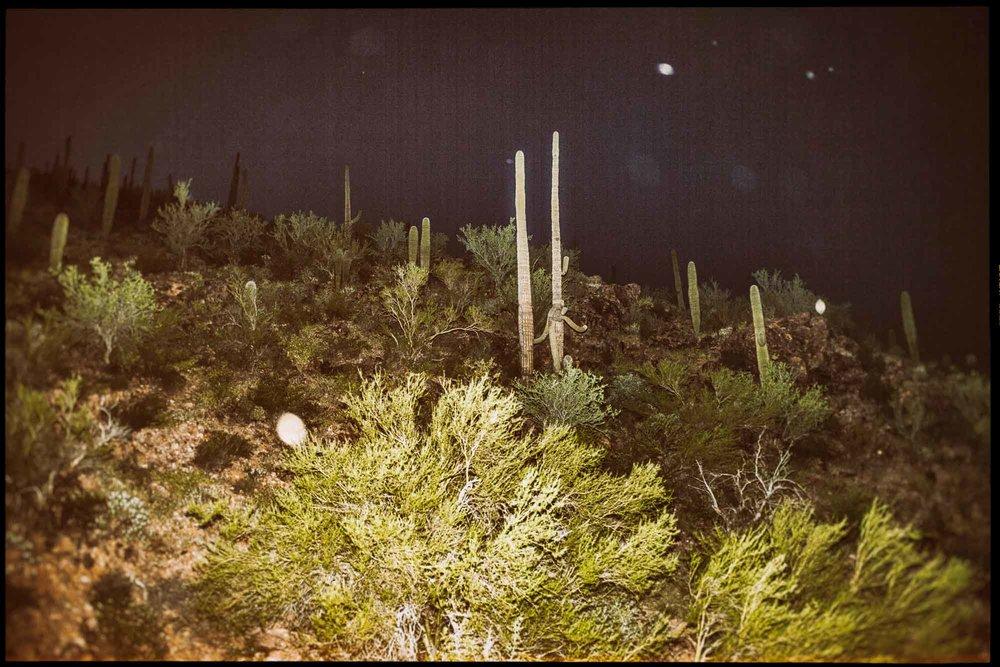 Sonoran Desert, 2013.