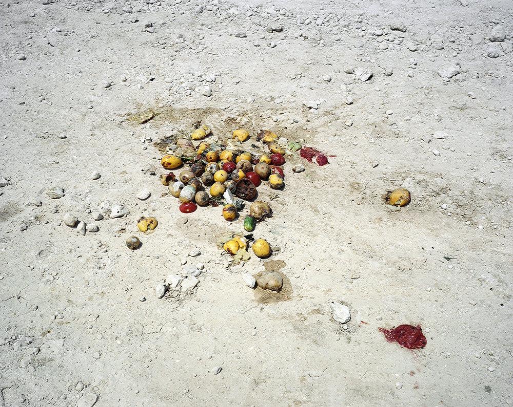 discardedfruit.jpg