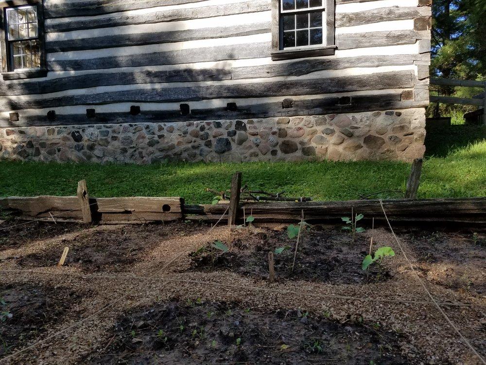 Kunze House garden