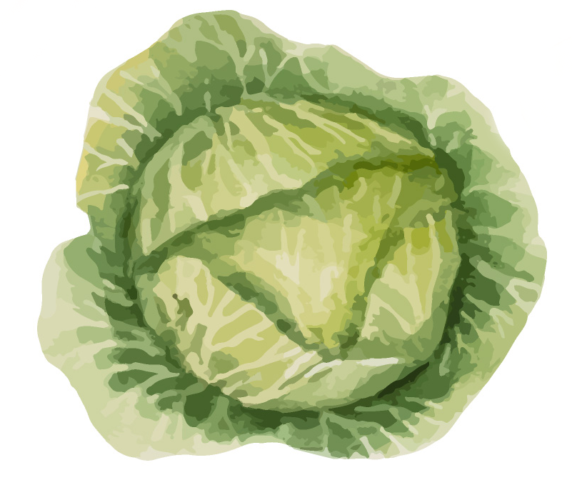 healthy ever after cabbage.png