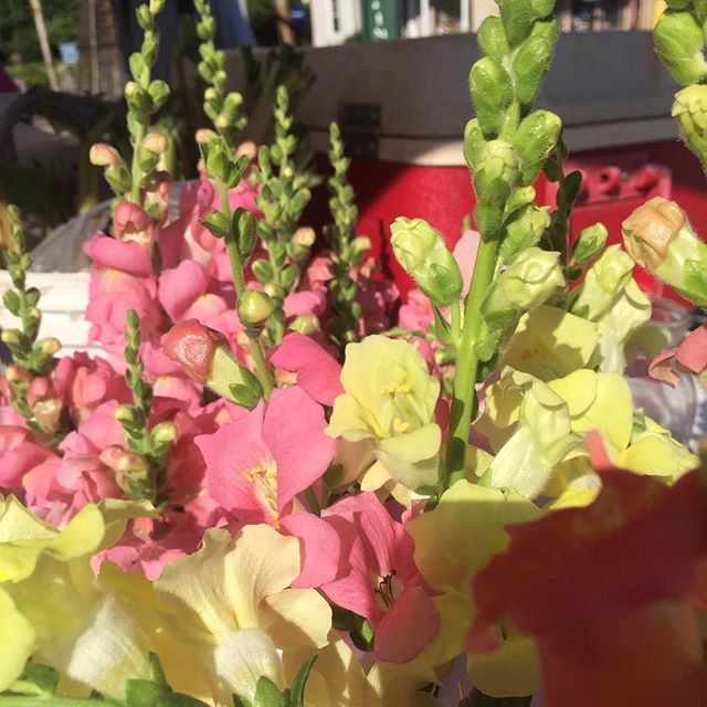 Gorgeous flowers! #farmersmarket #parisky