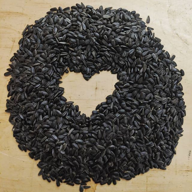 It's a cold snowy night but all our seeds are safe and sound for spring planting. #farmlove #farmlife #valentines #sunflower #seeds #sunshinecoastbc #love #farmtotable #farmfresh #microgreens🌱 #bcfresh #localbusiness #wintercuisine #staywarm