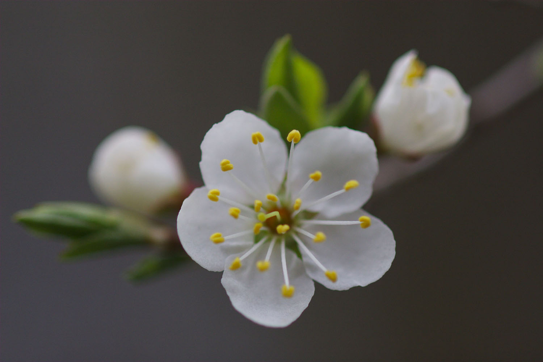 Whole World Is A Single Flower Conference Kwan Um School Of Zen
