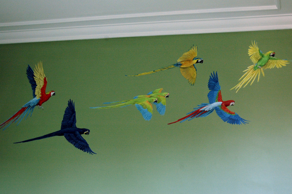 Rainforest Macaws Frederick Wimsett - murals and artistic design - other projects.jpg