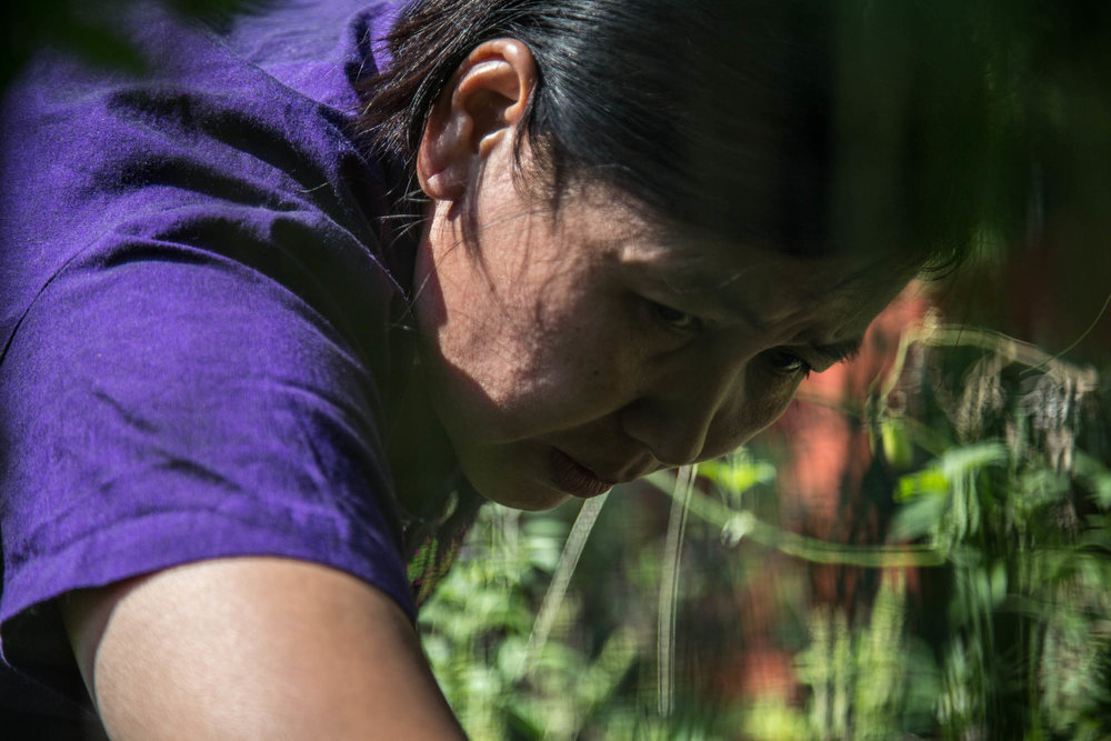 """Lwin picks vegetables in her backyard garden for the families dinner. She had seeds sent over from Myanmar, and now grows traditional crops. The garden is one of the ways that she continues on her practice with farming, as her parents were farmers and she grew up farming in Myanmar. """"We produce too much food to eat,"""" she said. """"We usually have to give some away to our neighbors."""""""