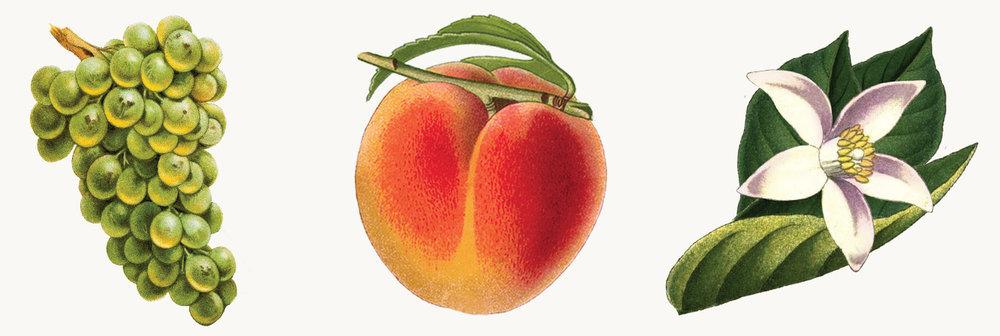 Grapes, Peach, Jasmine