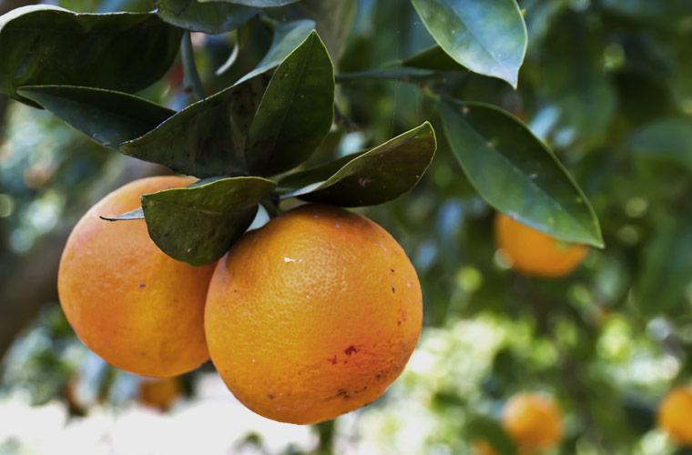 A perfect balanceof bright citrus -
