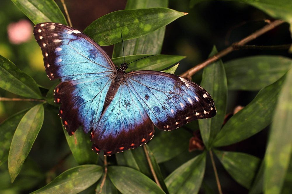 From caterpillar to butterfly...change is beautiful at SoulAnchoring.com