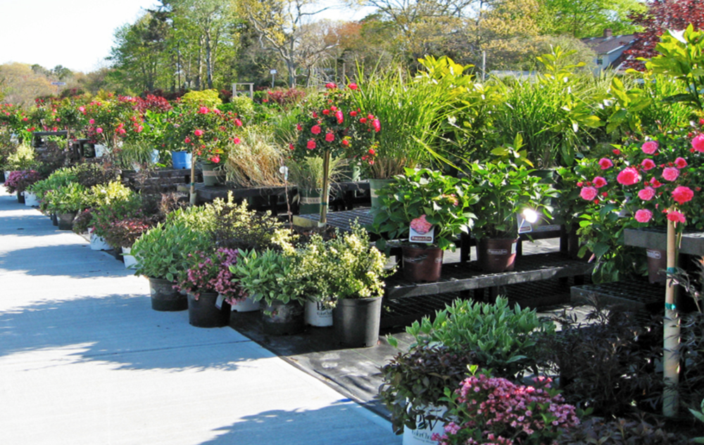 Top wholesale nursery in Orange County, NY