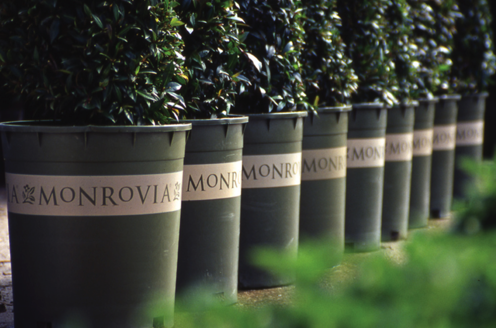 Top Monrovia nursery supply company in Hudson Valley, NY