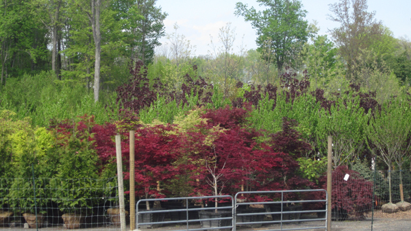 Why Hand Select your Landscape Plants from a Nursery in Rockland County, NY?