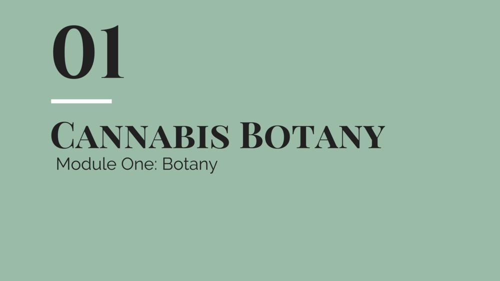 botany 1.png