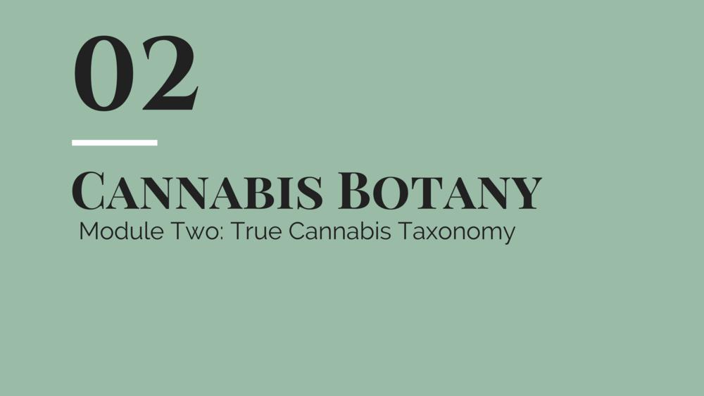 botany 2.png