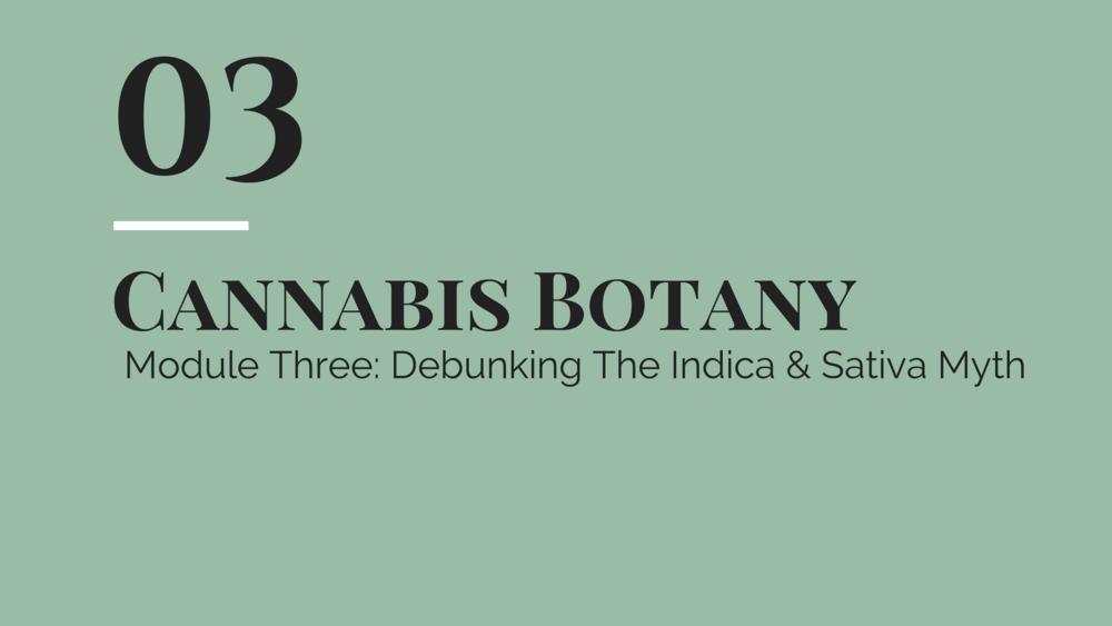 botany 3.png