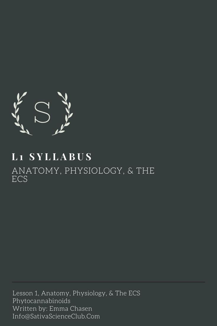 S3L1 Syllabus.png