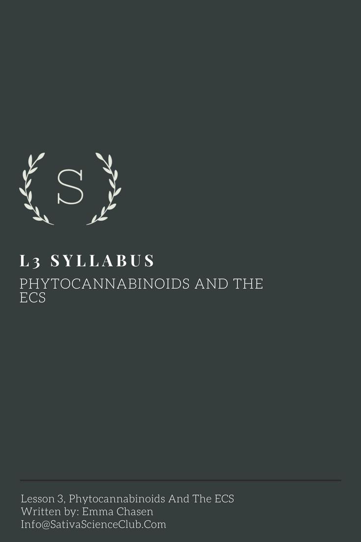 S3L3 Syllabus.png