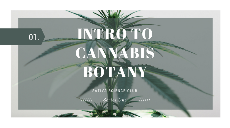 Intro-to-cannabis-botany-sativa-science-club..png