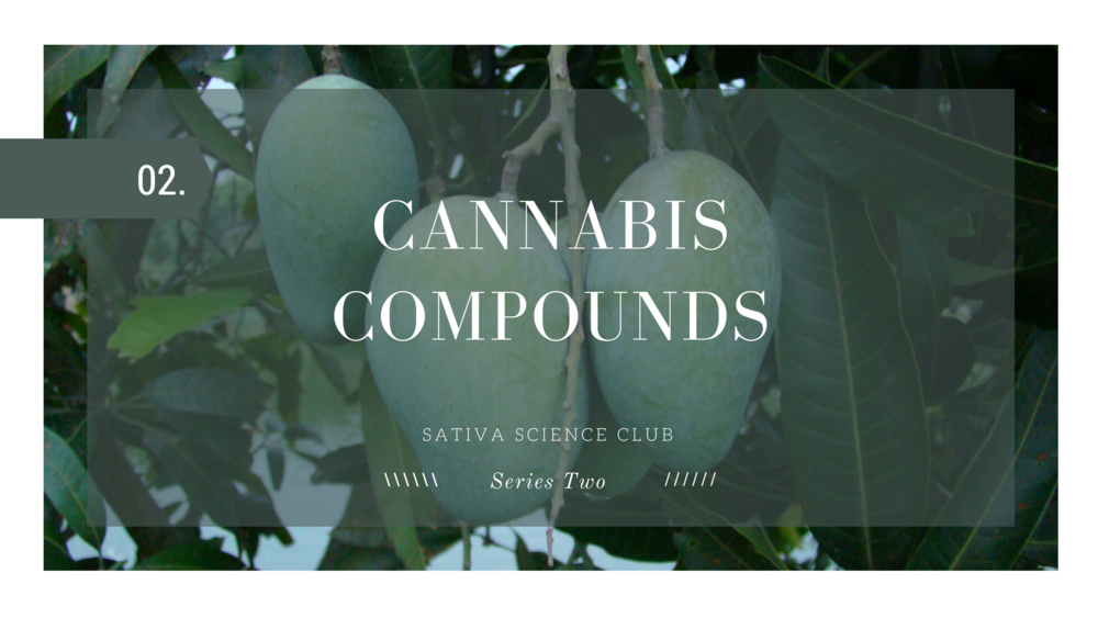 cannabis-compunds-sativa-science-club.png