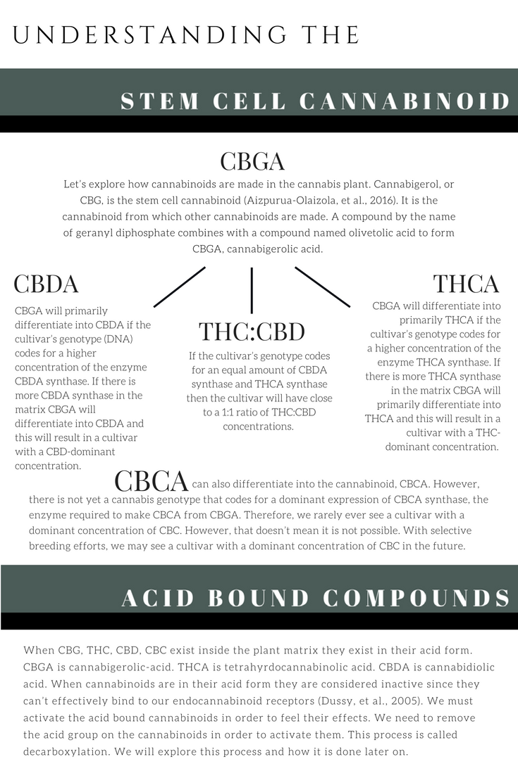 stemcellcannabinoid.png