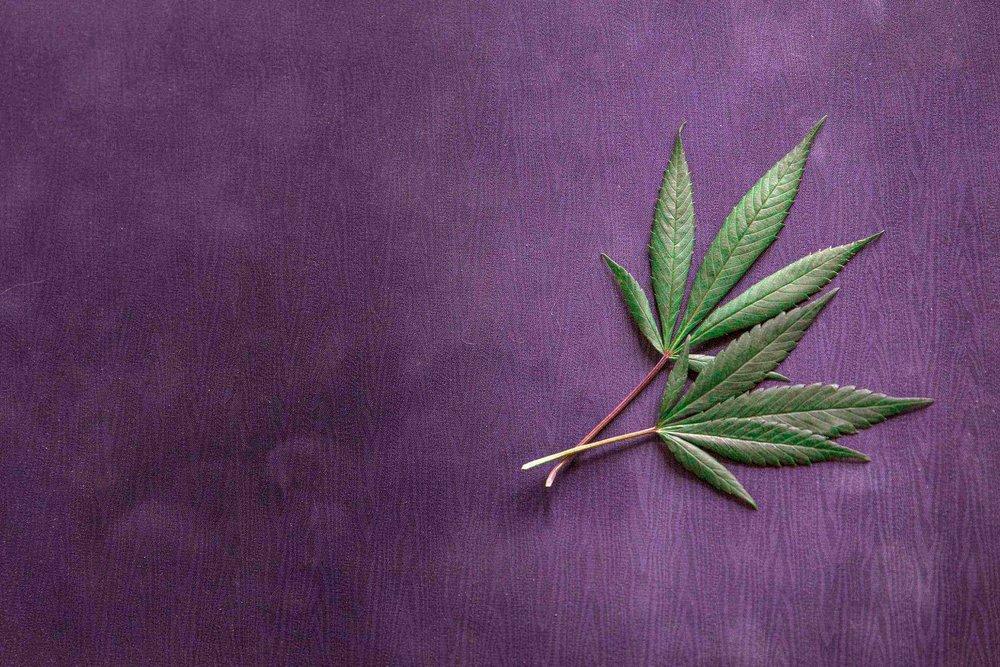 Yoga+Mat+Cannabis+_+Marijuasana+_+CBD+Infused+Yoga.jpg