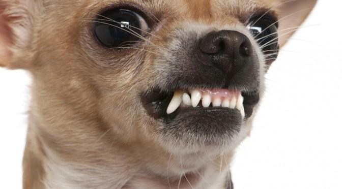 dog-bite-672x372.jpg