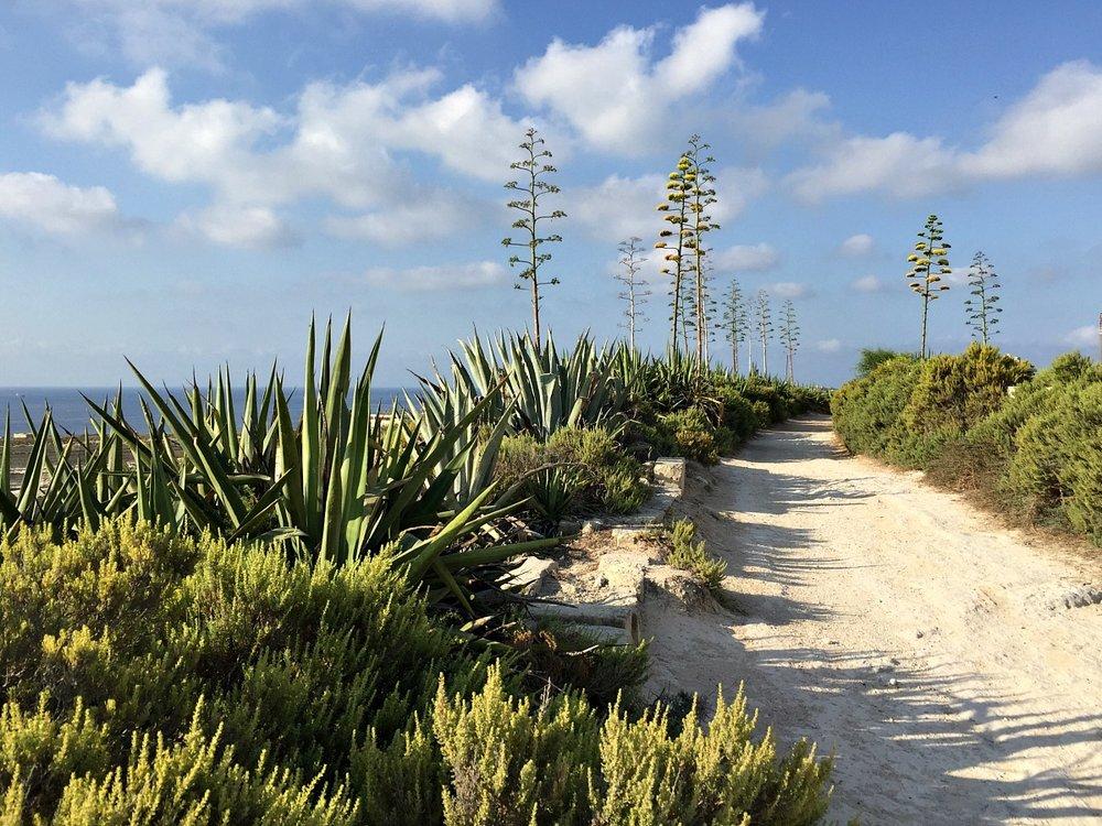 marsascala nature walk malta