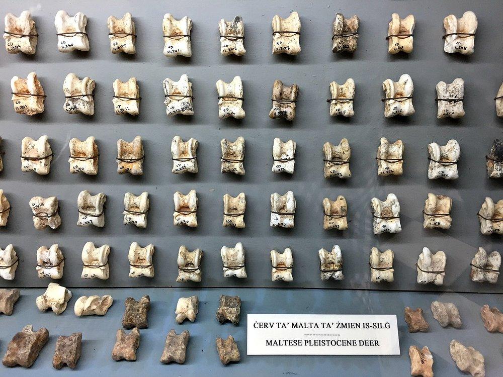 ghar dalam museum in malta bones