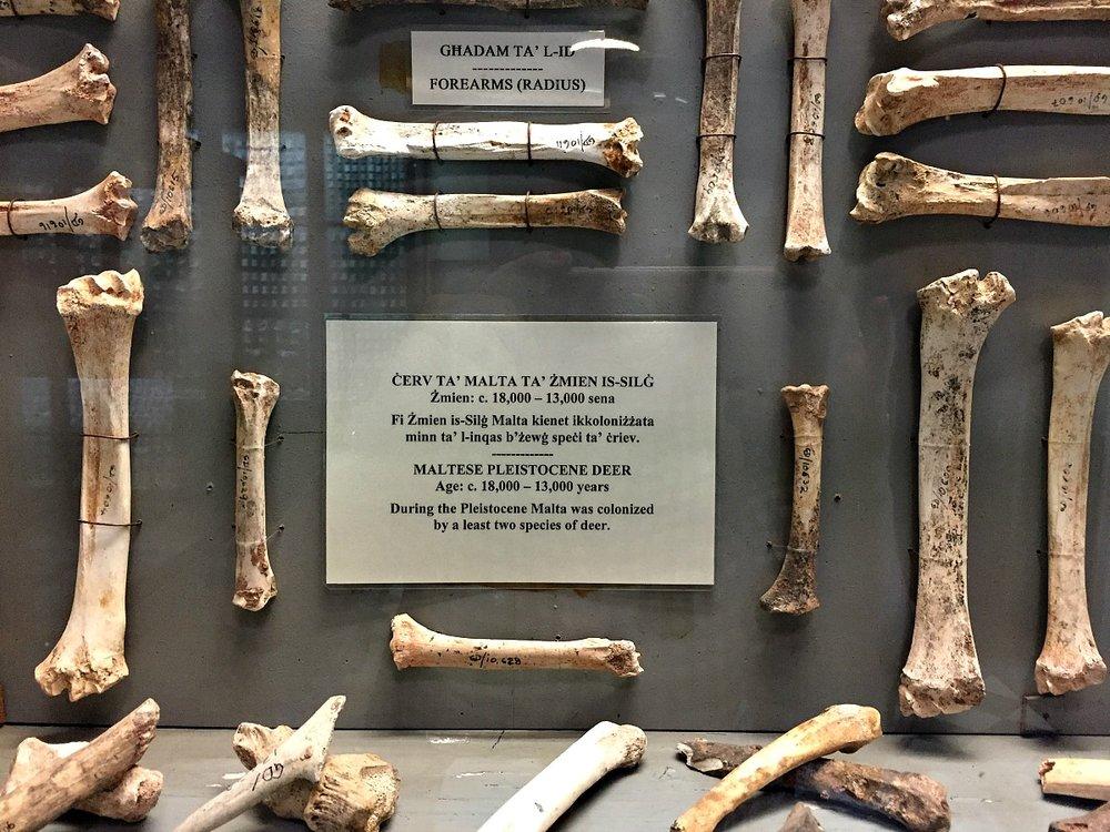 ghar dalam museum in malta