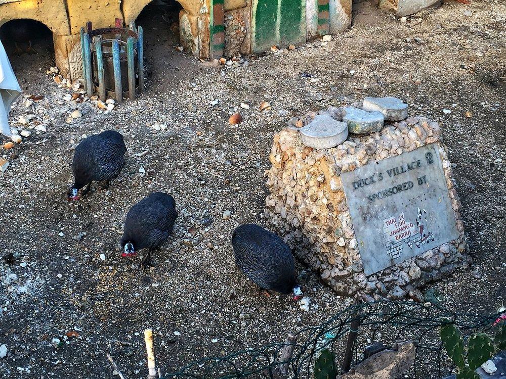 duck village animals in sliema gzira