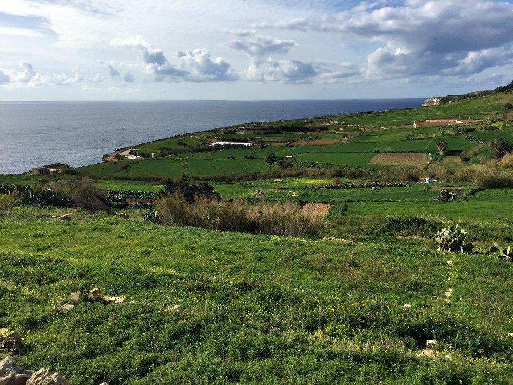gozo nature coastline