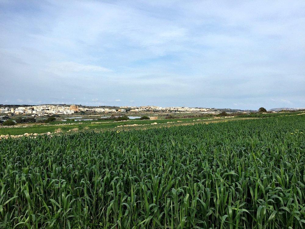 victoria lines view malta fields