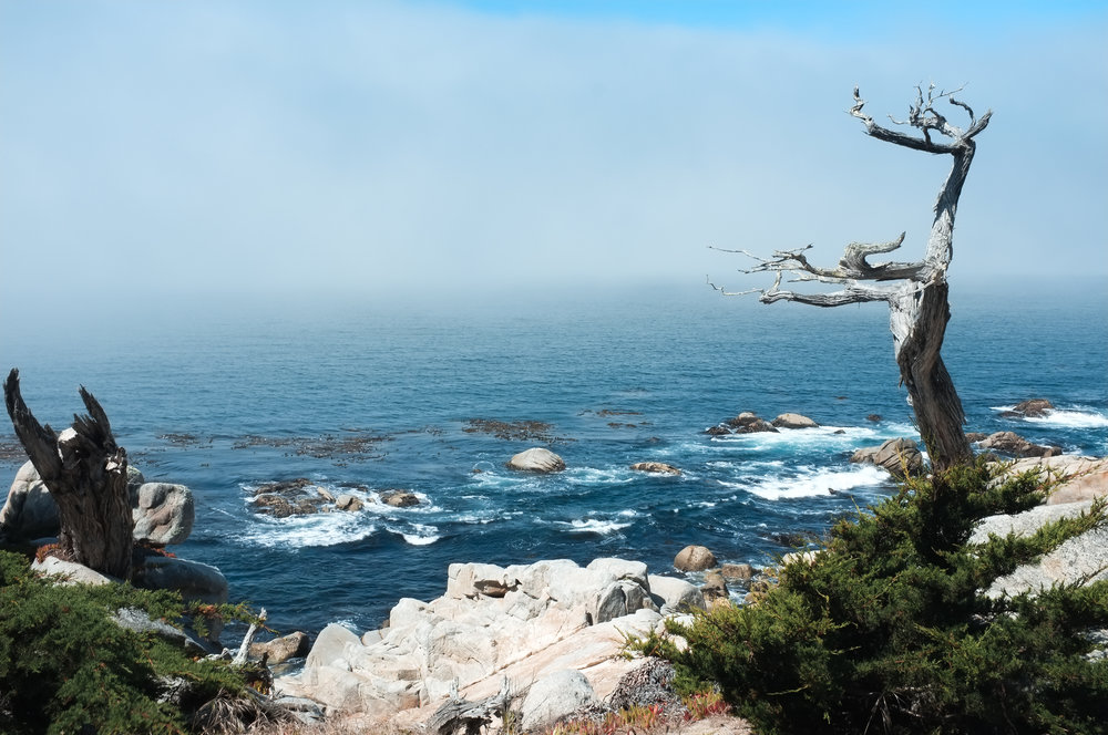 Ghost Tree - 17 Mile Drive
