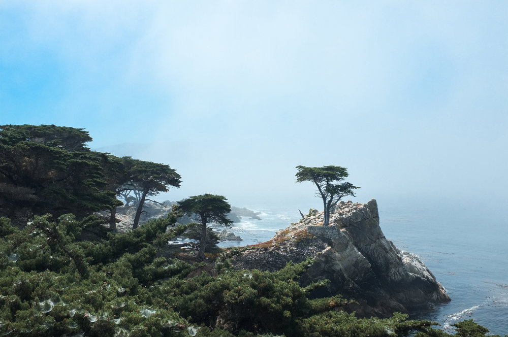 Lone Cypress - 17 Mile Drive