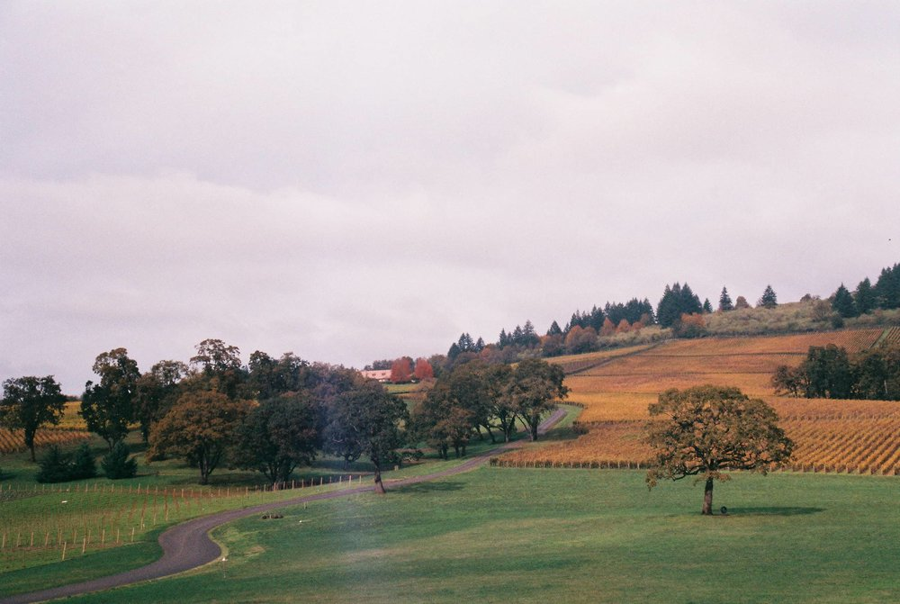 Views from Stoller Winery