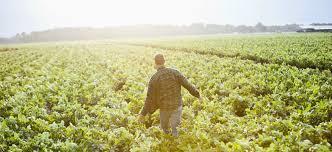 tristan hooker agriculture