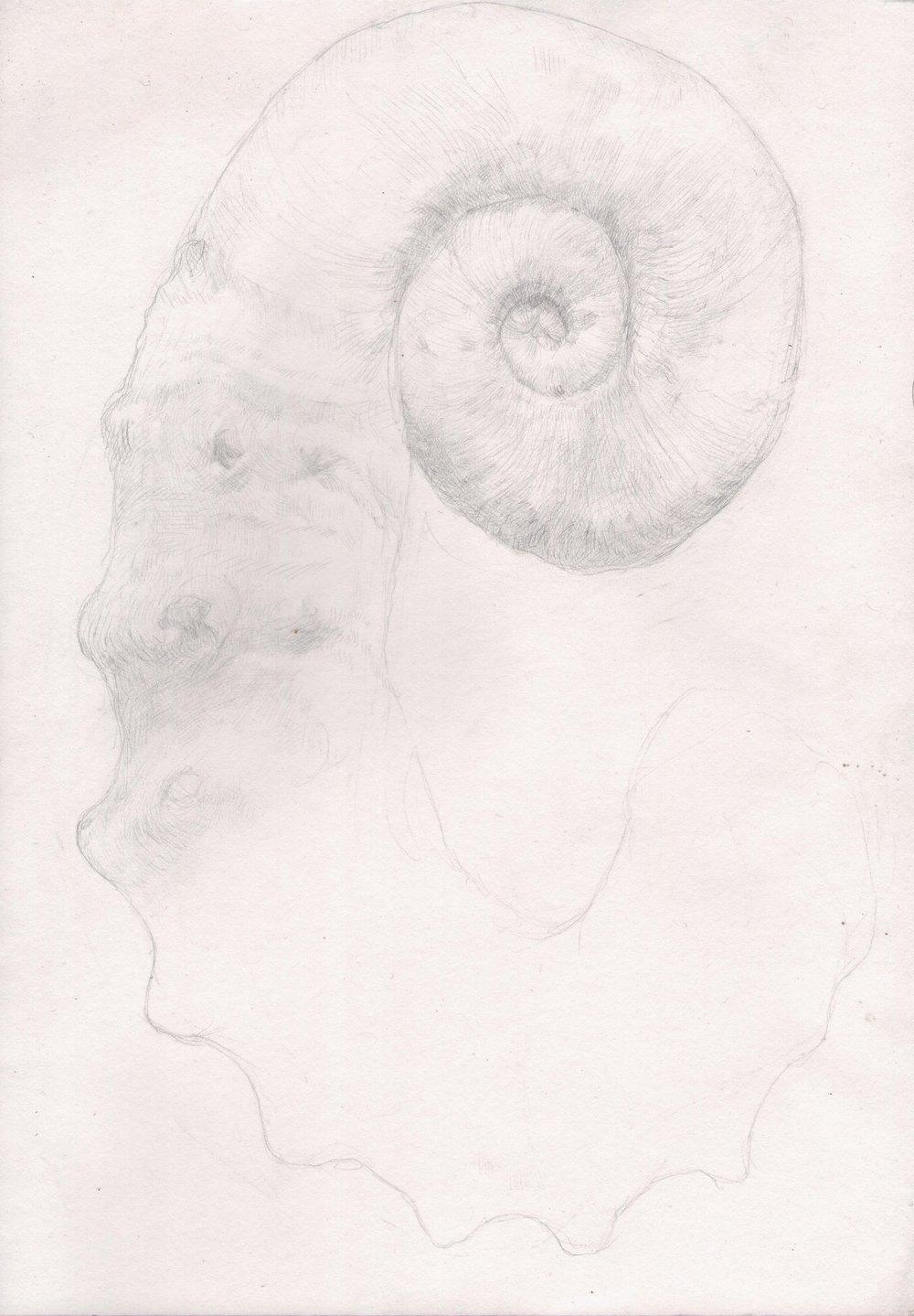 5. Ammonite 2.jpg