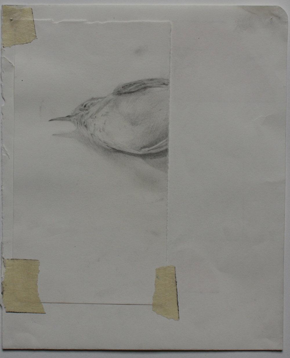 Bird. Pencil on paper 5''x6'' JPG.JPG