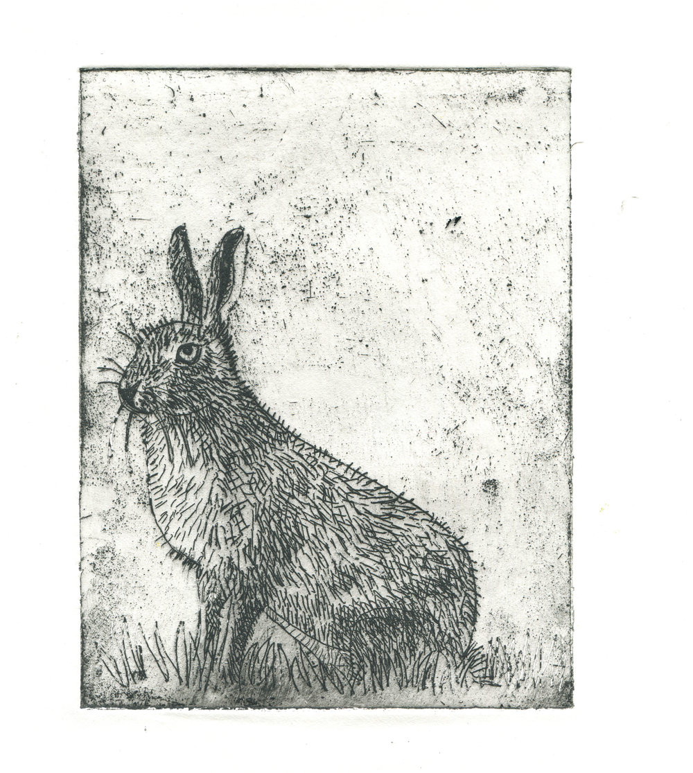etching of a hare.jpg
