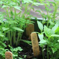 veggie workshop 1.jpg